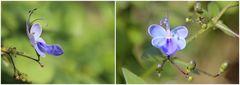 Schmetterling oder Blume ...?