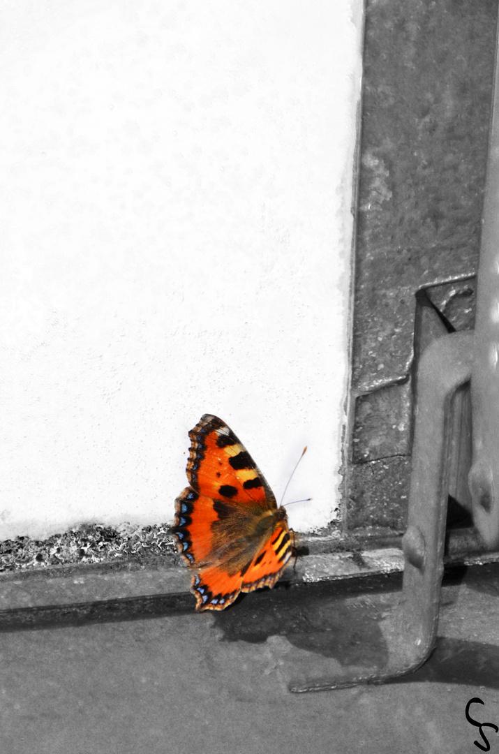 Schmetterling ohne Aussicht