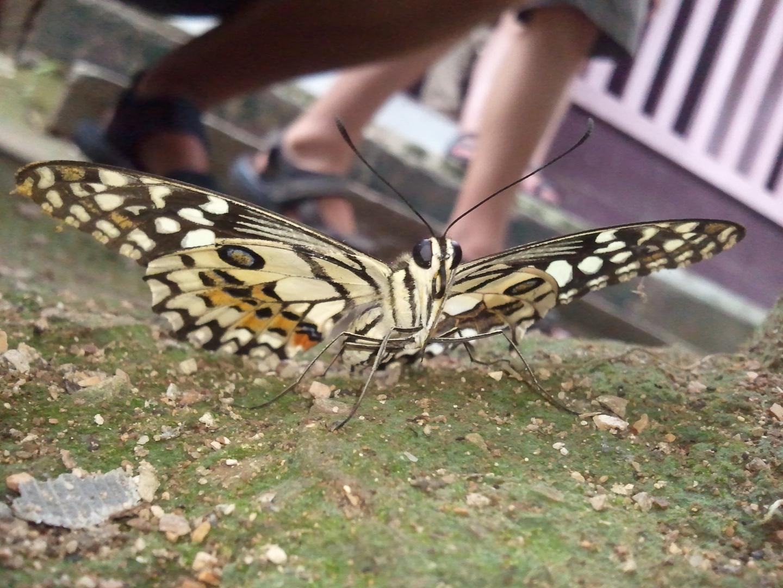 Schmetterling Posing