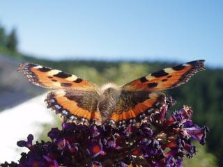 Schmetterling so nah und doch so schön