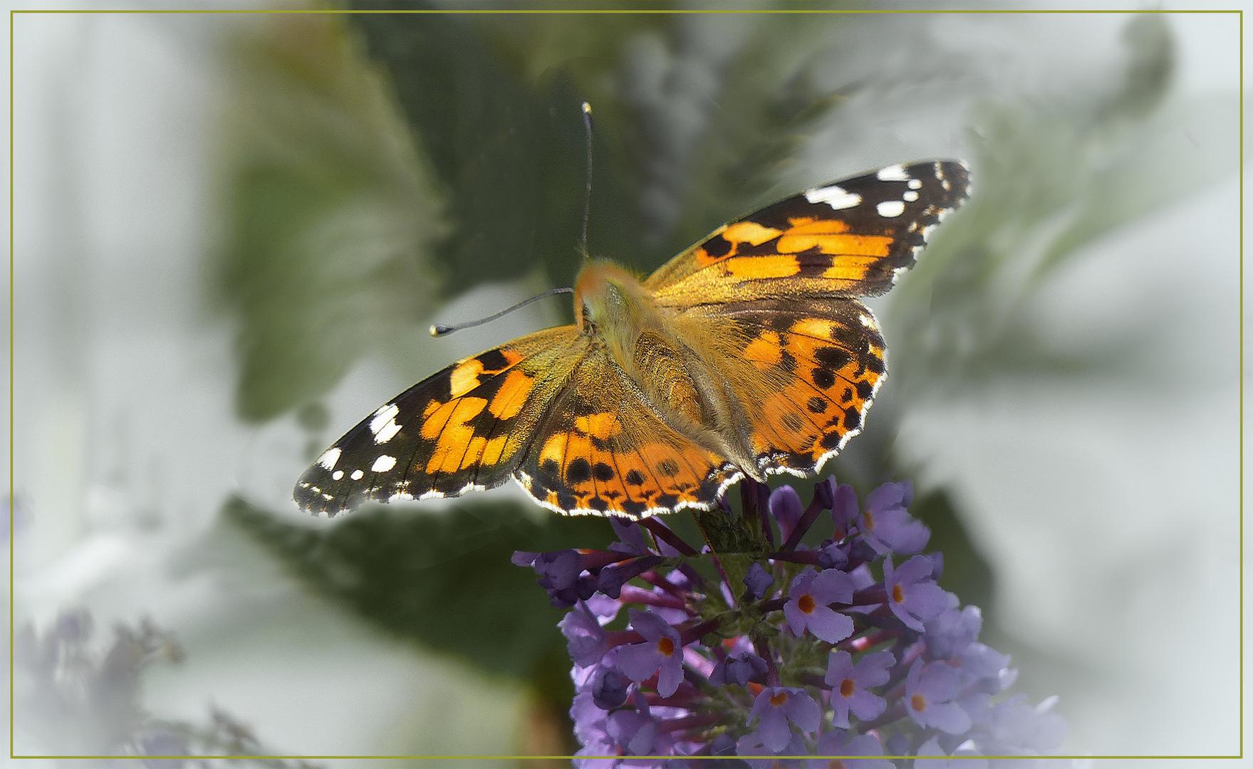 Schmetterling Sommer 2018