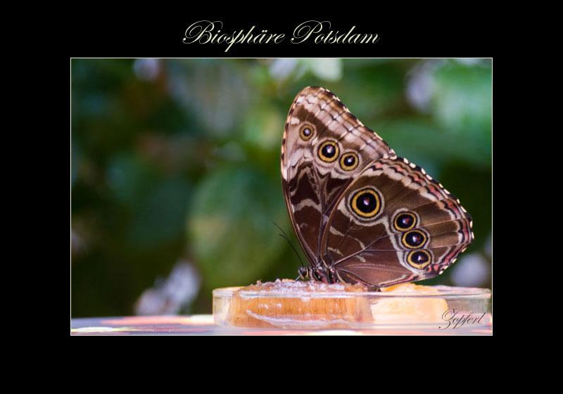 Schmetterling-Sonderausstellung in der Biosphäre Potsdam