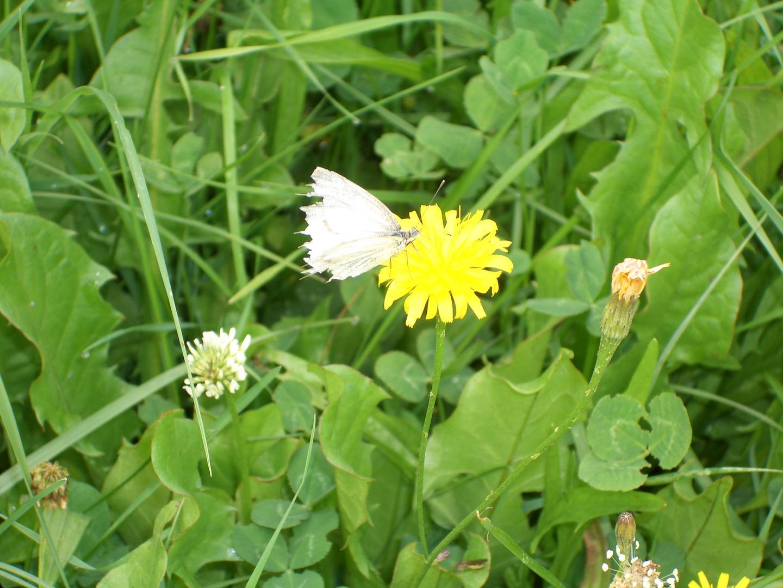 Schmetterling und Blümchen