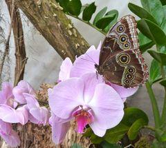 Schmetterling und Orchidee