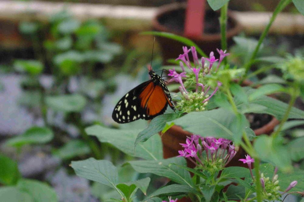 Schmetterling- und weiter gehts..