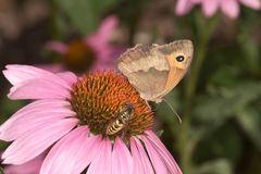 Schmetterling und Wespe