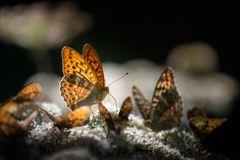 Schmetterling - Versammlung....
