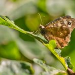 Schmetterling_01