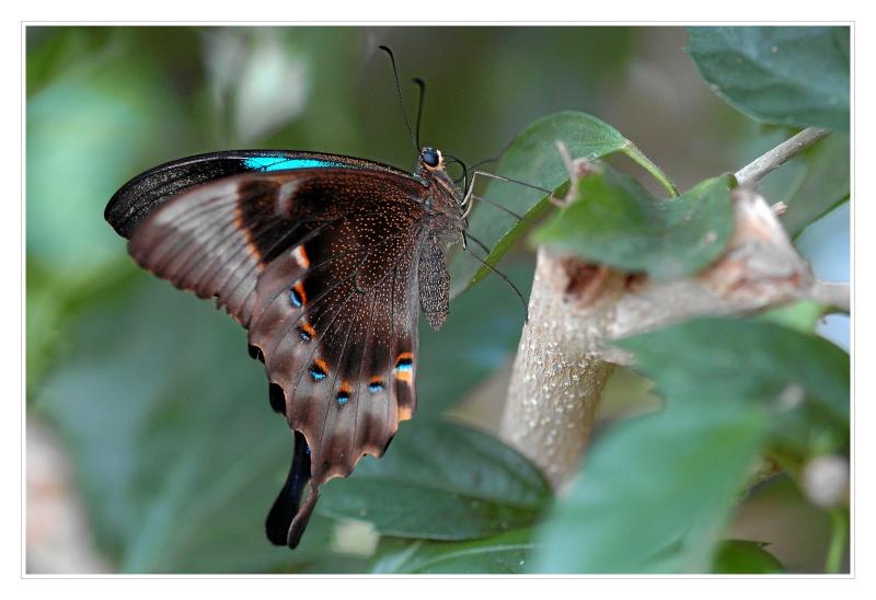 Schmetterling_#04409_1