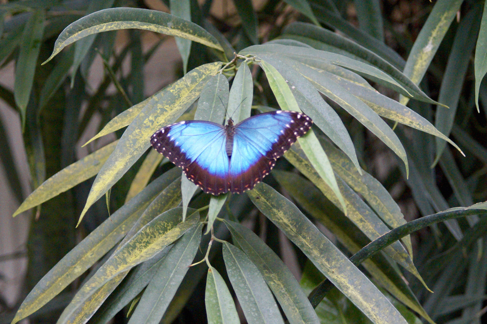 Schmetterling4