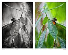 Schmetterlinge 001
