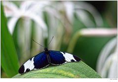 Schmetterlinge 002