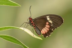 Schmetterlinge 04