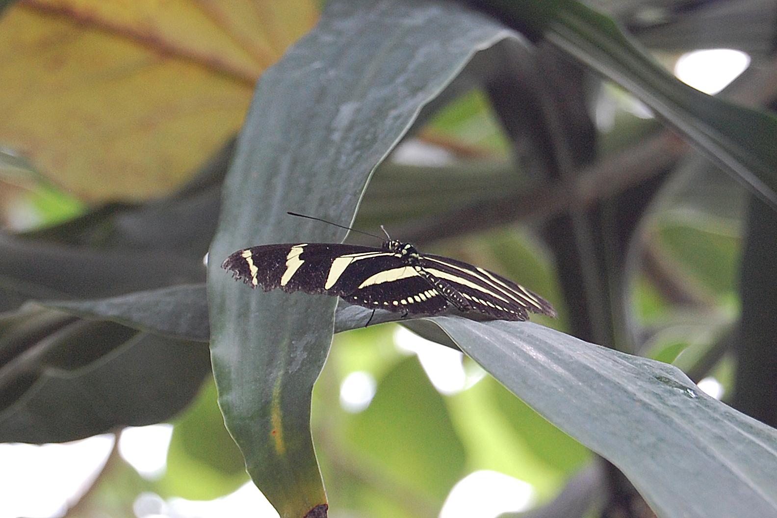Schmetterlinge 10