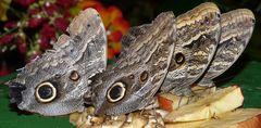 Schmetterlinge - 2