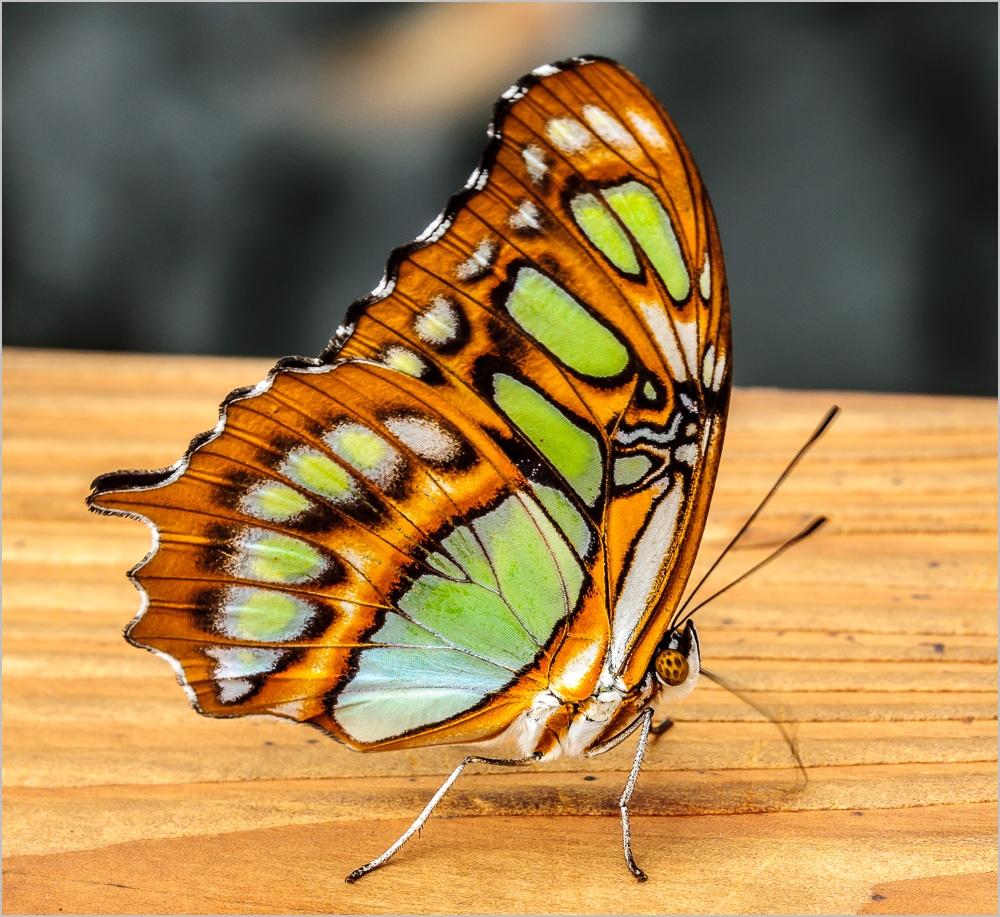 Schmetterlinge 2