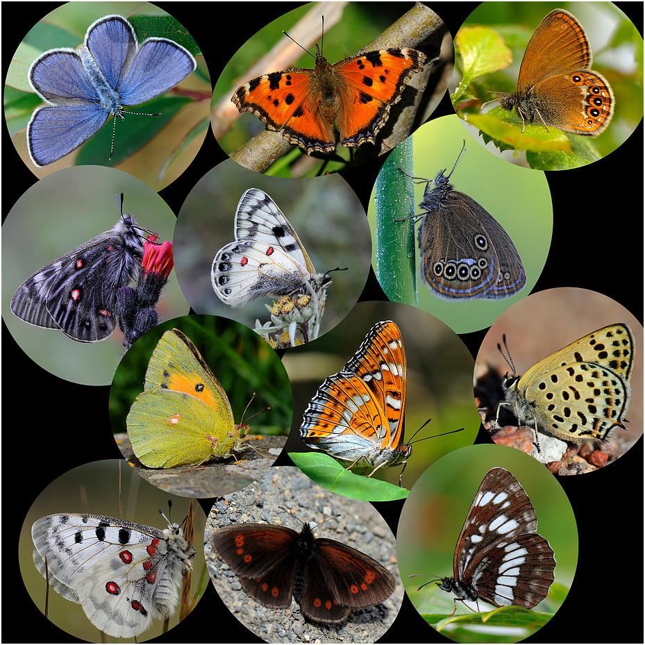 Schmetterlinge 2011