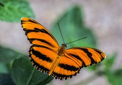 Schmetterlinge 25