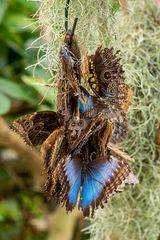 Schmetterlinge an Futterstelle