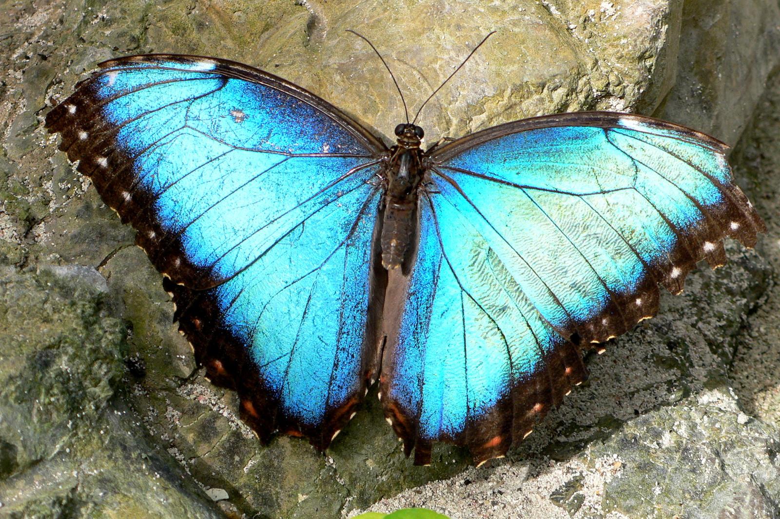 Schmetterlinge auf Aruba