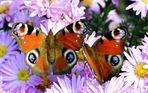 ~~Schmetterlinge~~