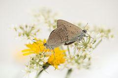 Schmetterlinge im Bauch...
