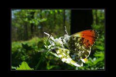 Schmetterlinge im Bauch ??