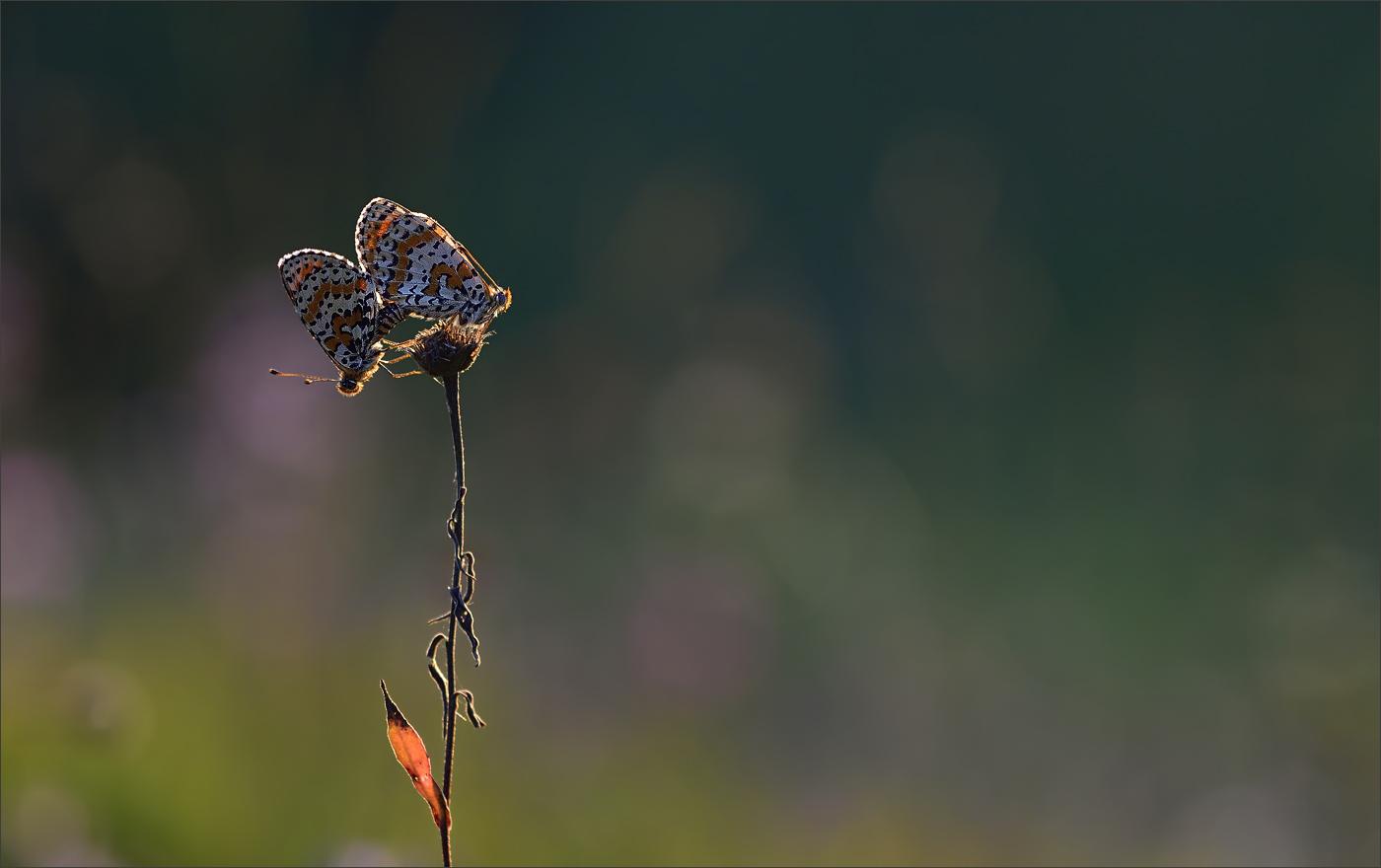 - Schmetterlinge im Bauch - Foto & Bild | natur-kreativ