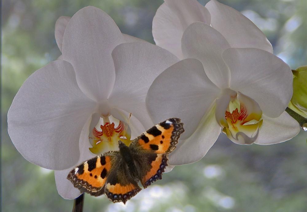 Schmetterlinge im Bauch ( oder Haus ?? )