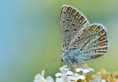Schmetterlinge im Garten 2