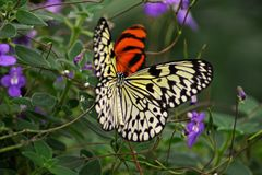 Schmetterlinge in Pose