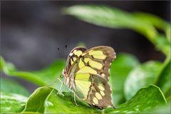 Schmetterlinge in Stainz I