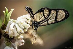 Schmetterlinge in Stainz III