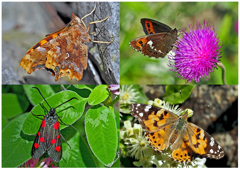 Schmetterlinge schenken Freude! (2) * - Un regard en arrière et en avant: papillons.