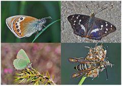 Schmetterlinge schenken Freude! (3) * - Un regard en arrière et en avant: papillons.