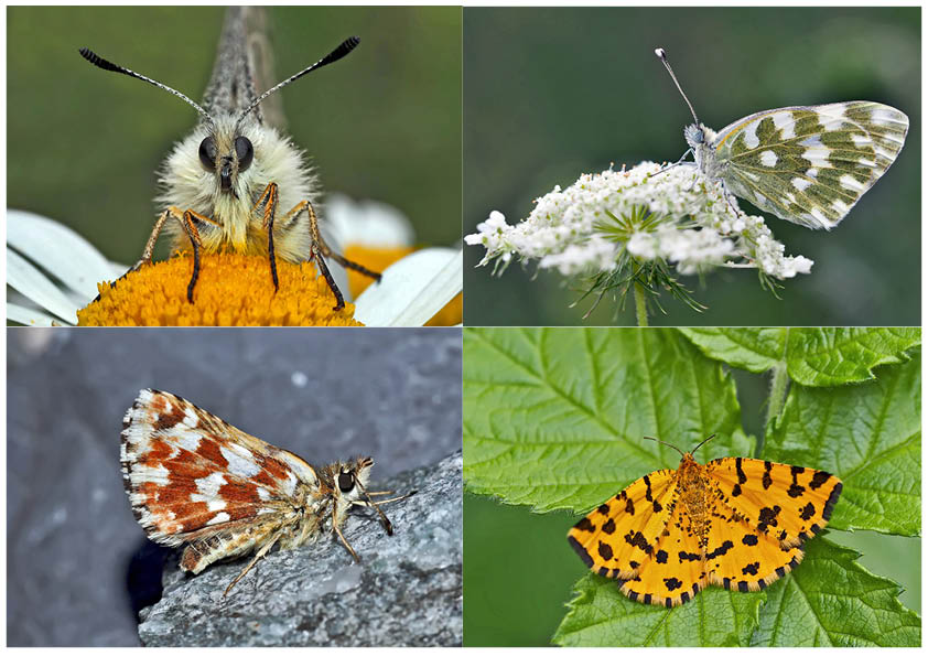 Schmetterlinge schenken Freude! (4) * - Un regard en arrière et en avant: papillons.