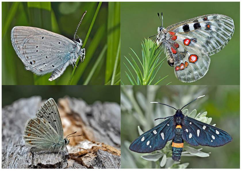 Schmetterlinge schenken Freude! (5) * - Un regard en arrière et en avant: papillons.
