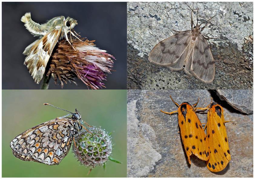 Schmetterlinge schenken Freude! (6) * - Un regard en arrière et en avant: papillons.