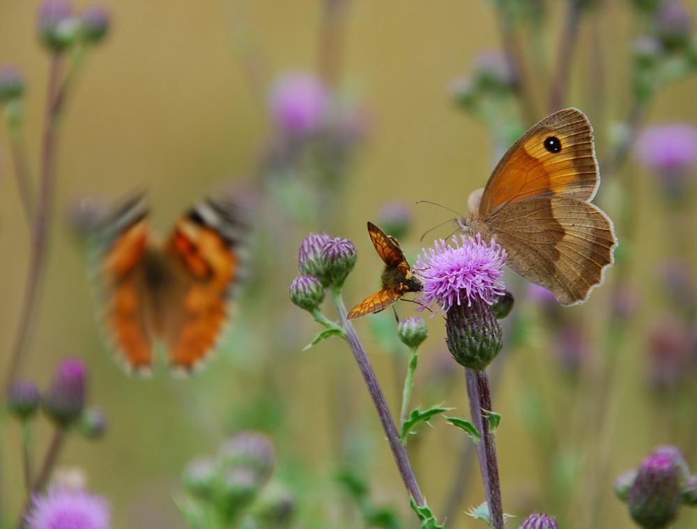 Schmetterlinge, Schmetterlinge und nochmals Schmetterlinge...