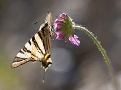 Schmetterlinge sind Sympathieträger...