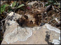 Schmetterlinge und Flechten
