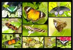 Schmetterlingepracht auf der Mainau