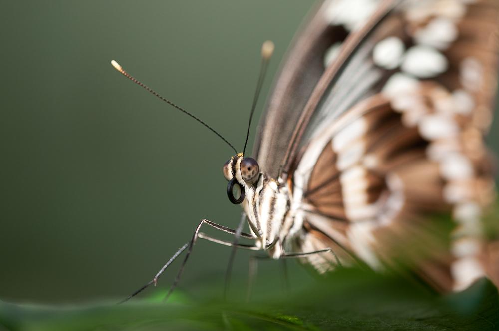 Schmetterlingnahaufnahme