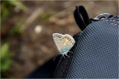 Schmetterlings Dank....