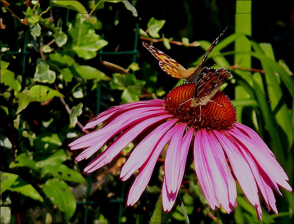 Schmetterlings...