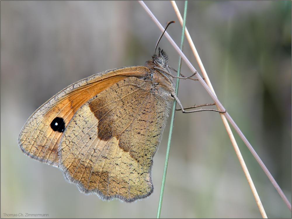 Schmetterlings -Gemälde