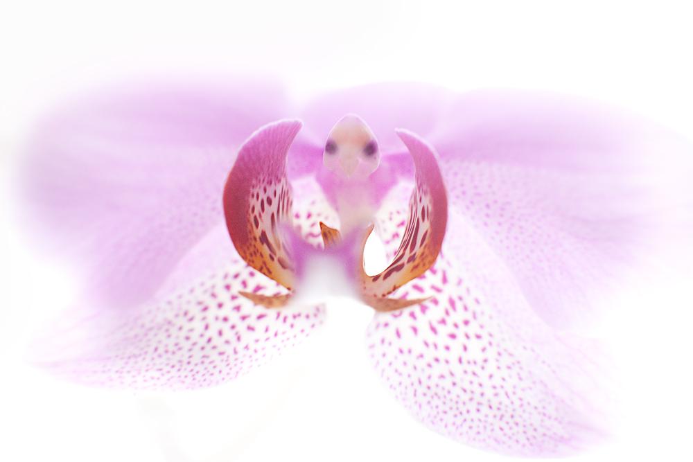 Schmetterlings-Vogel