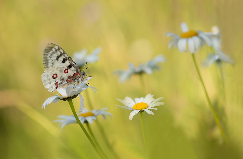Schmetterlings-Wiese...