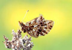 Schmetterlingsaussicht