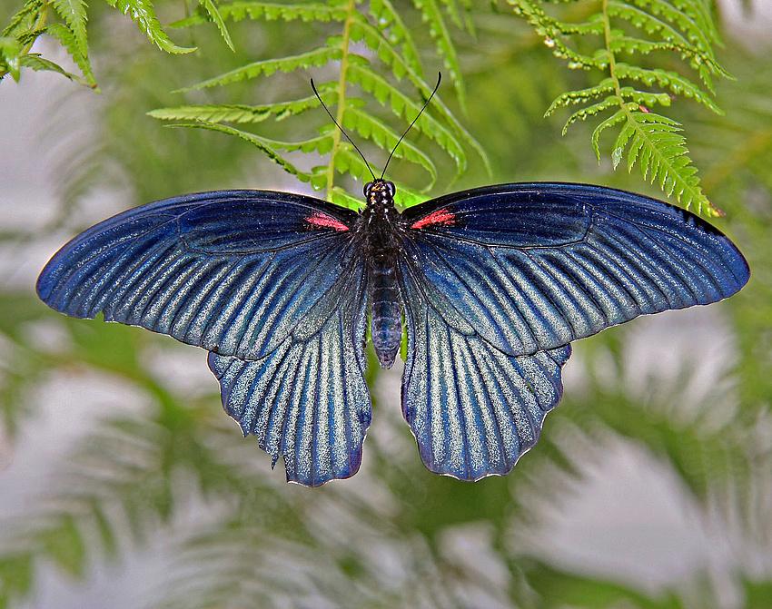 Schmetterlingsausstellung 3